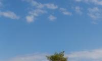 Arbre solitaire dans le causse Méjean - Canon EOS 5D Mark III - EF 50 mm f/1,4 USM - ISO 100 - f/5,6 - 1/1000 s