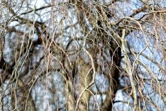 Branches d'un arbres