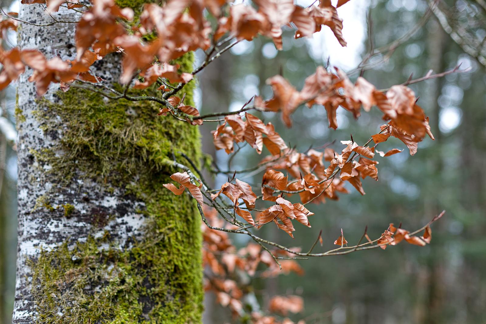 galerie arbres - feuilles d'automne