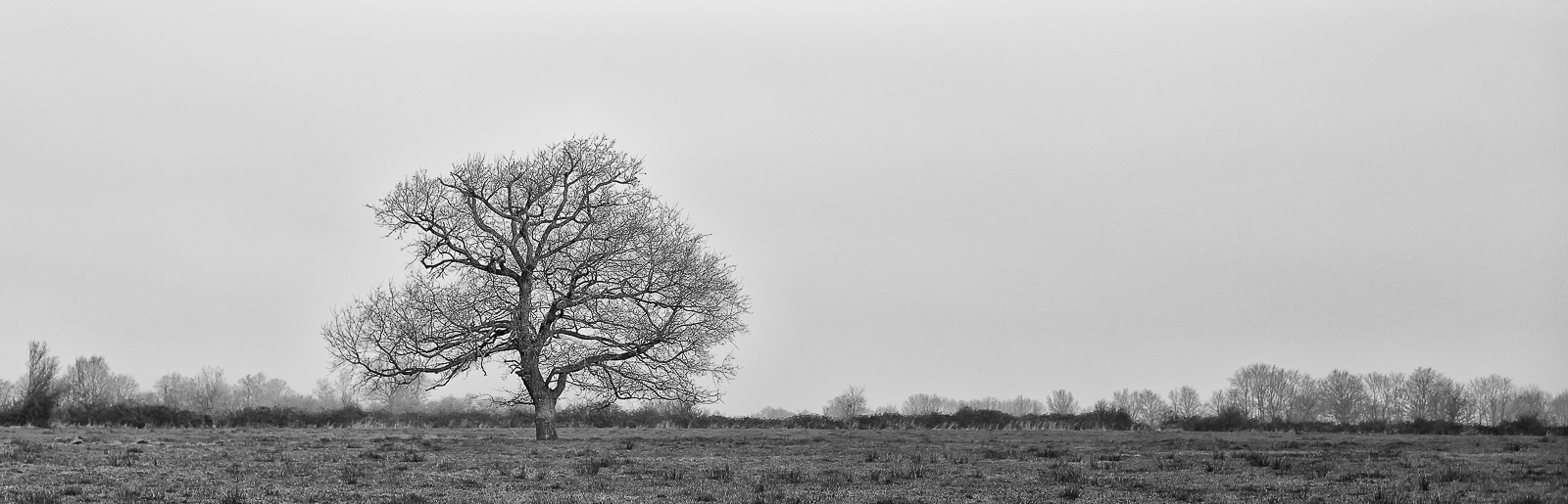 Photos Arbre solitaire - Panoramique par recadrage - N&B