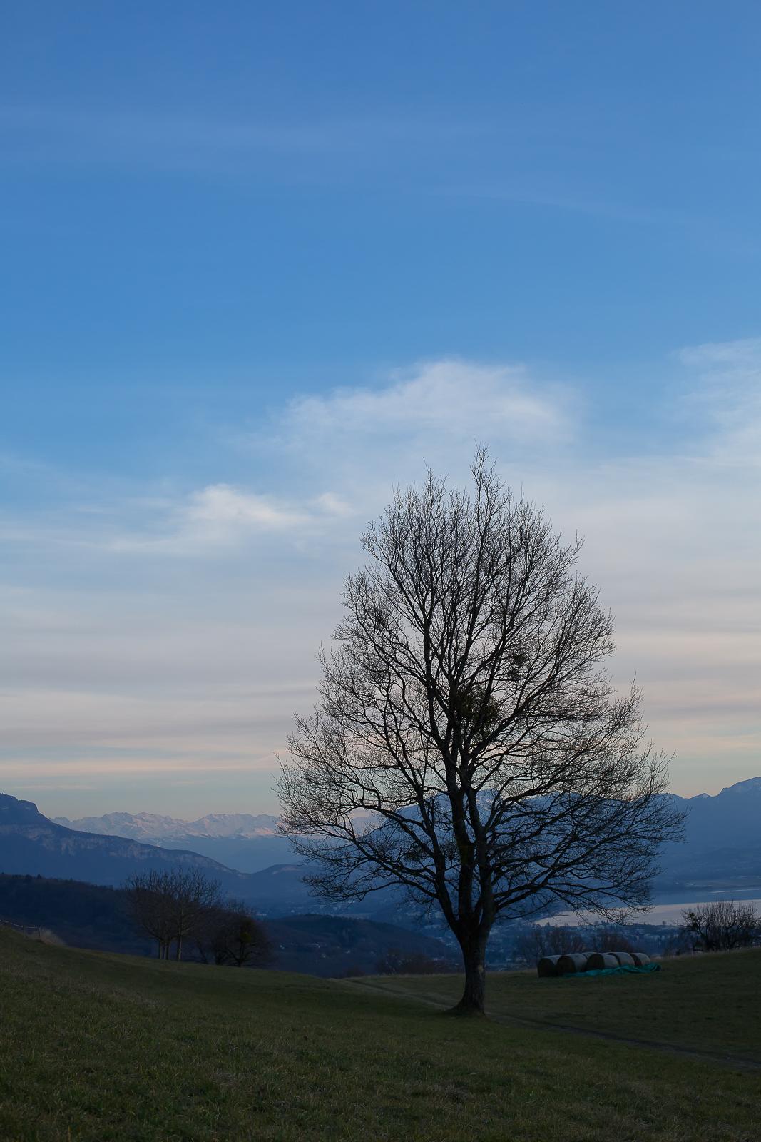 arbre solitaire et chaine de belledonne