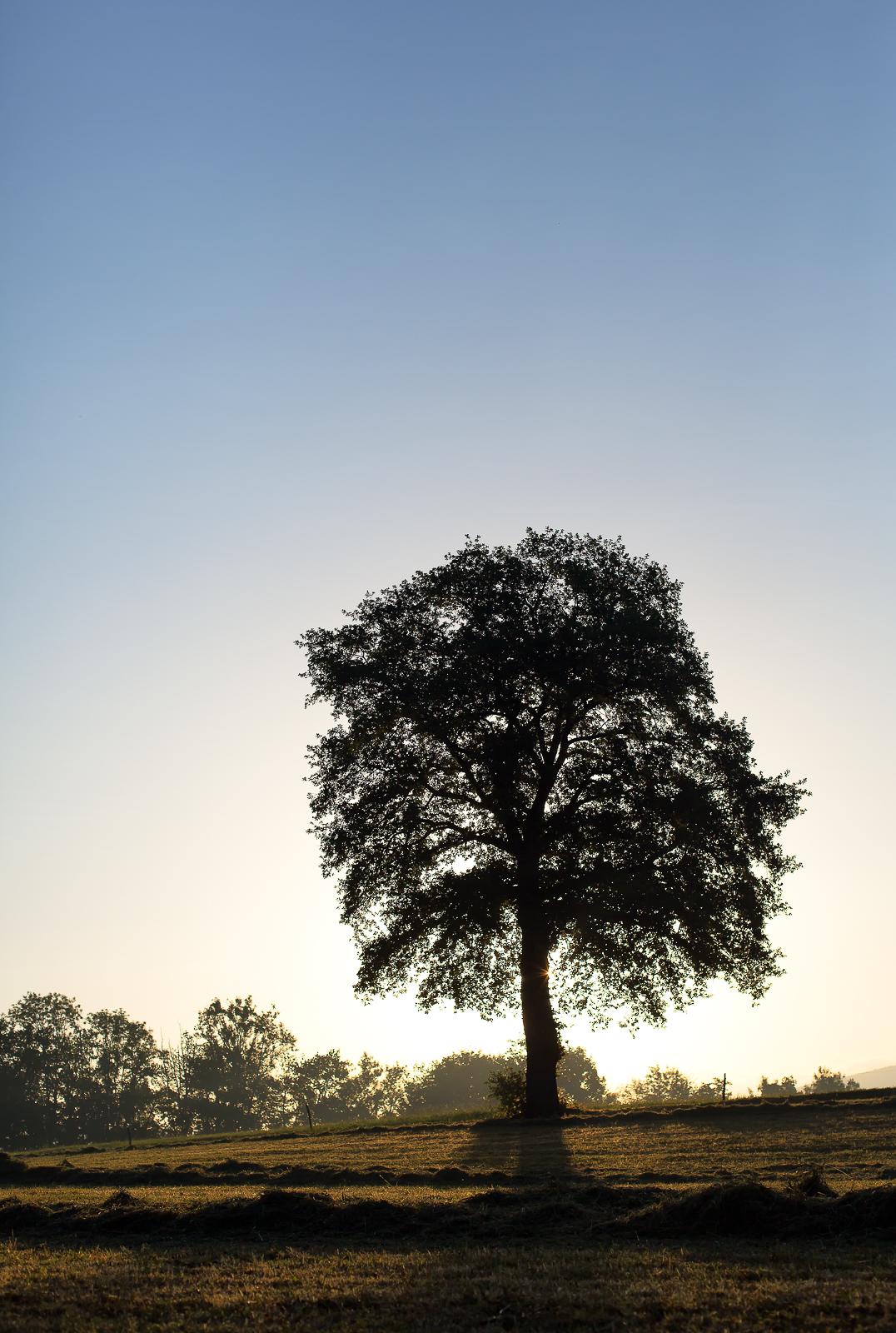 Photo d'un arbre au lever du soleil