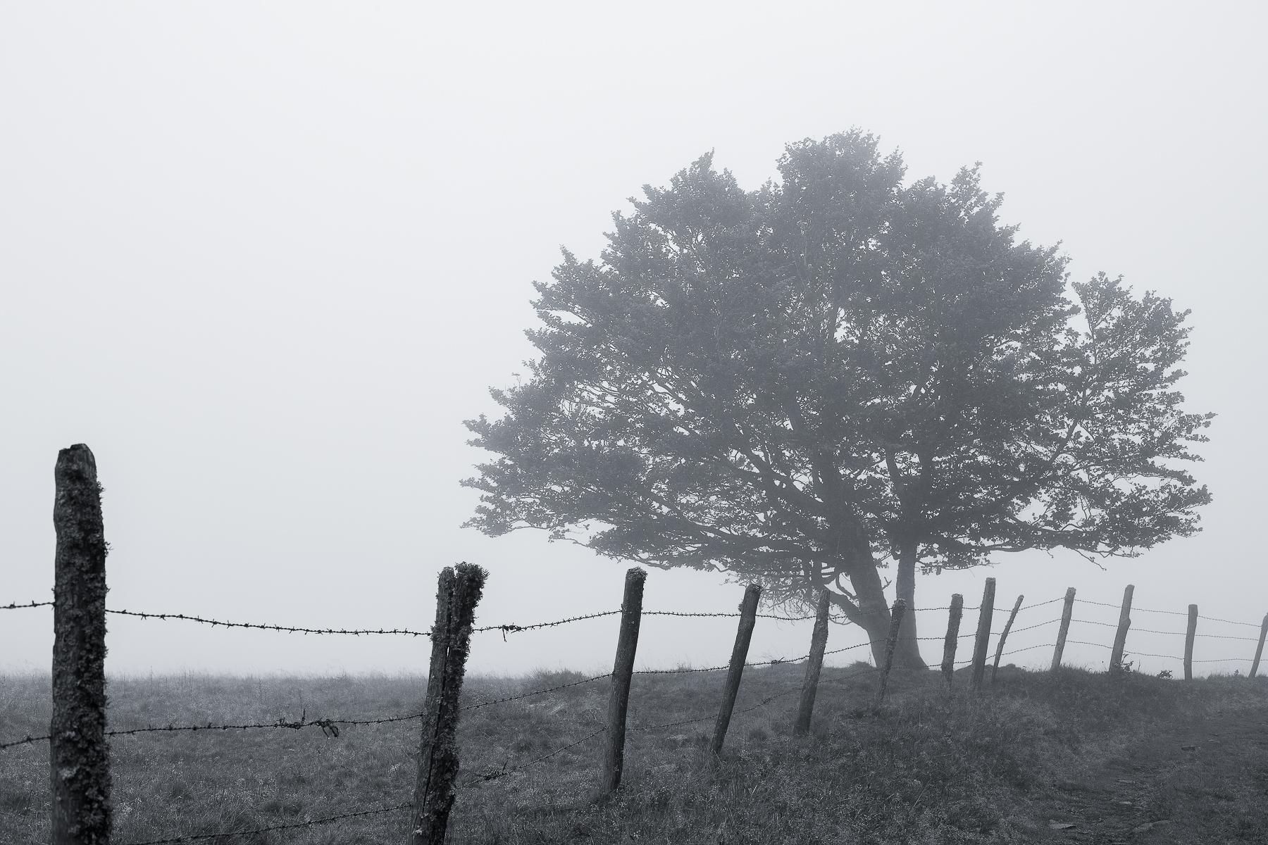 Arbre solitaire dans le brouillard en noir et blanc