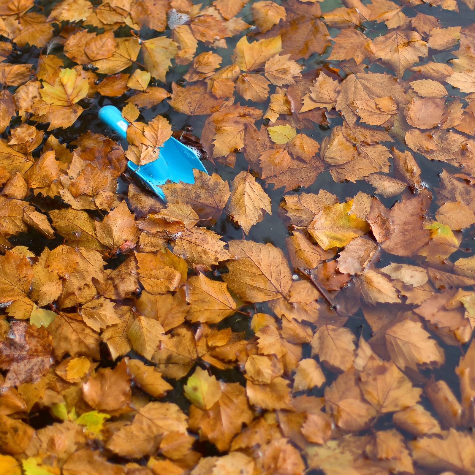 Projet photo 52 - Feuilles mortes et pelle en plastique