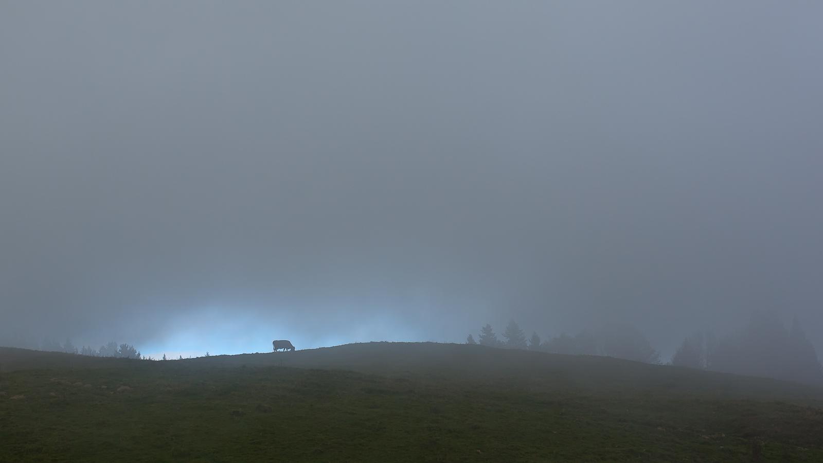 Mont Revard une vache dans la brume