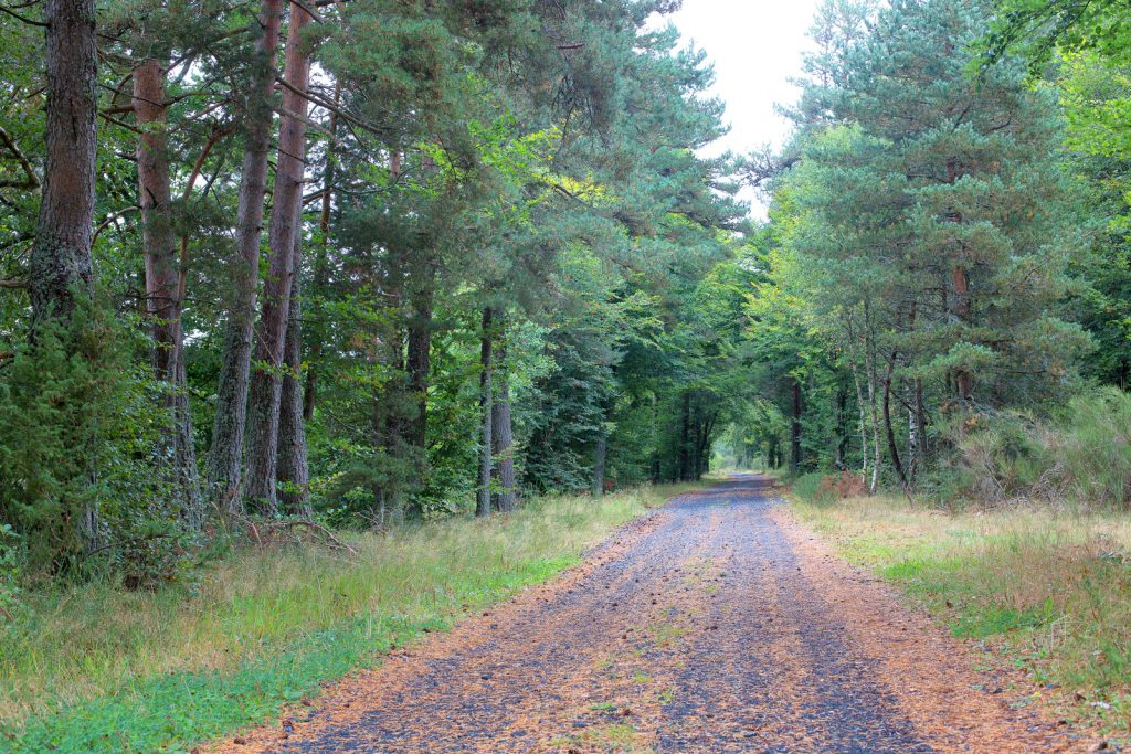 Tour des monts d'aubrac - forêt