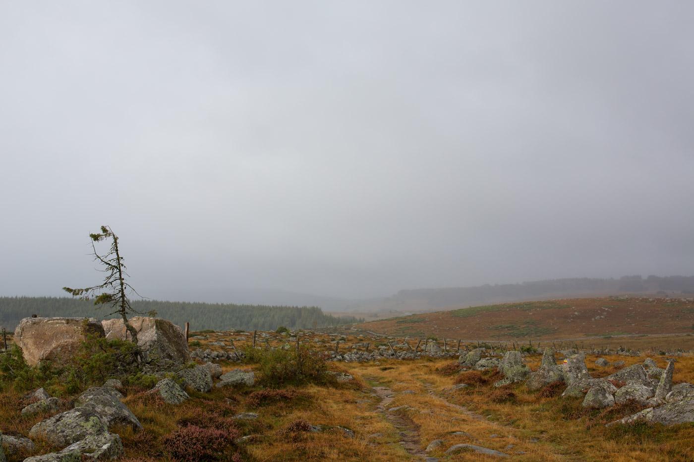 Tour des Monts d'Aubrac - Paysage de l'Aubrac