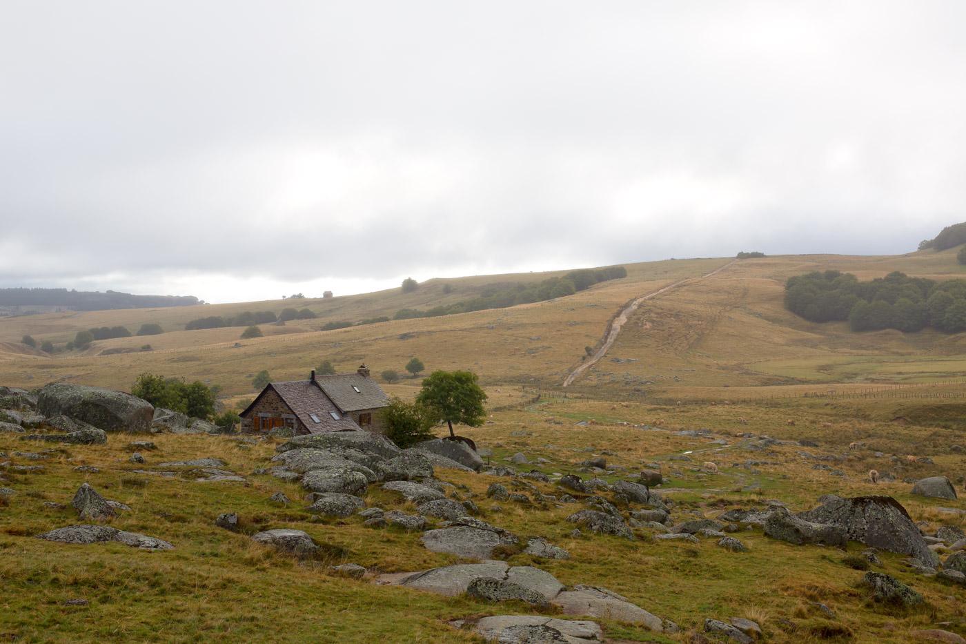 Tour des monts d'Aubrac - Refuge des Rajas et son arbre