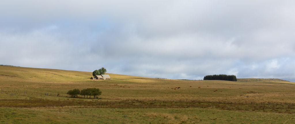 Randonnée en Aubrac - Paysage d'Aubrac