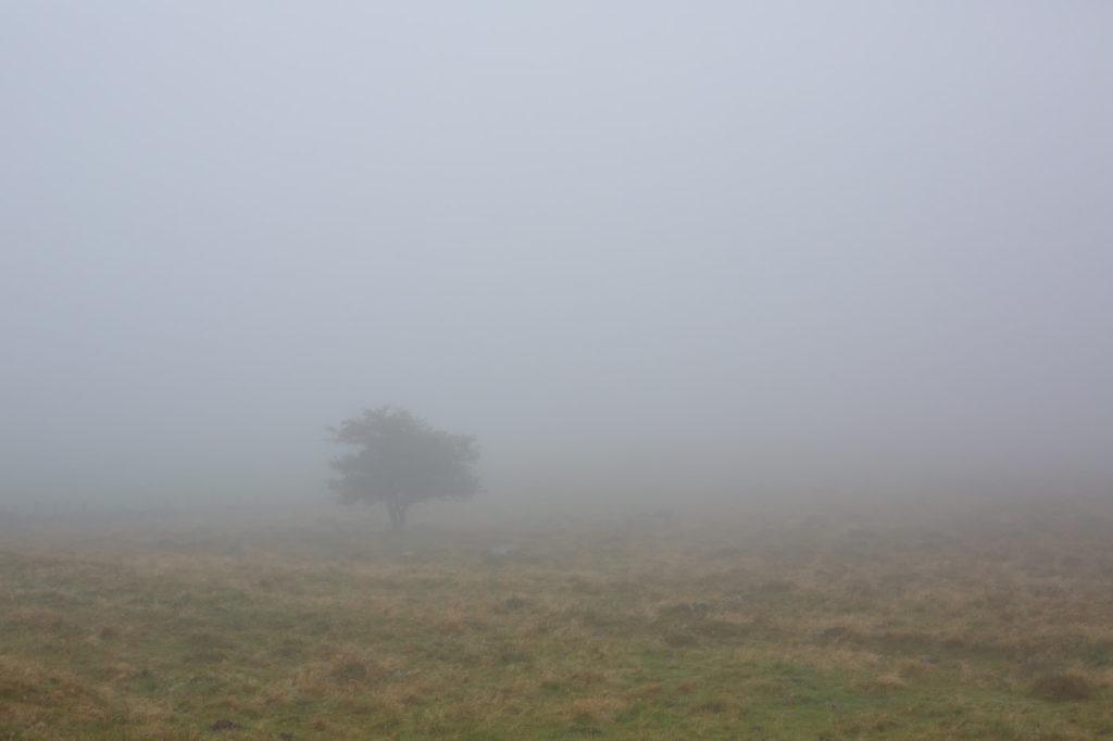 Tour des Monts d'Aubrac - Arbre dans le brouillard