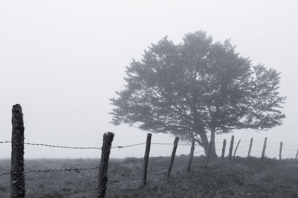 Tour des Monts d'Aubrac - Arbre dans le brouillard en noir et blanc