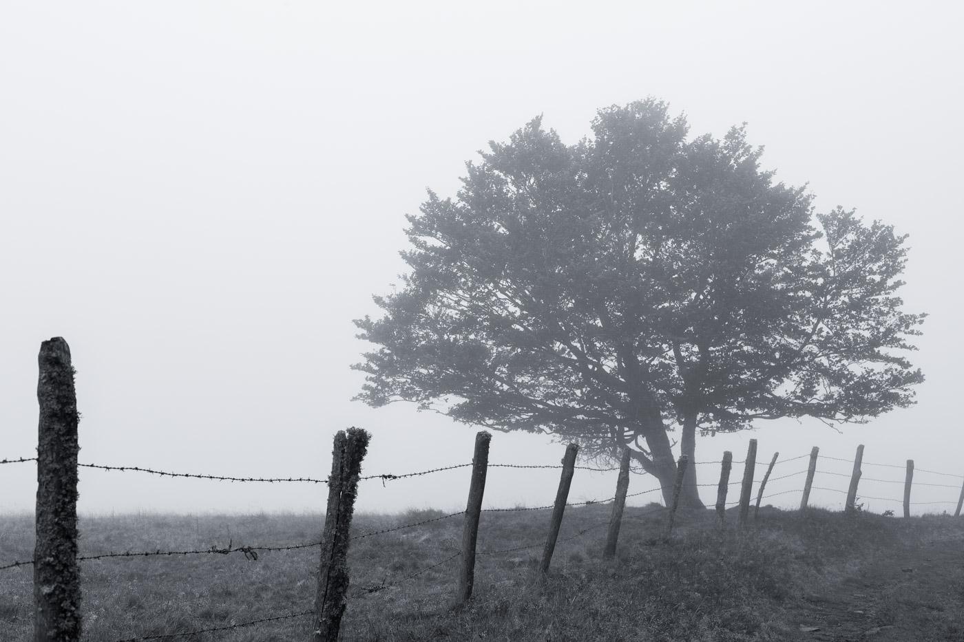 tour des monts d 39 aubrac arbre dans le brouillard en noir et blanc yapasfoto. Black Bedroom Furniture Sets. Home Design Ideas
