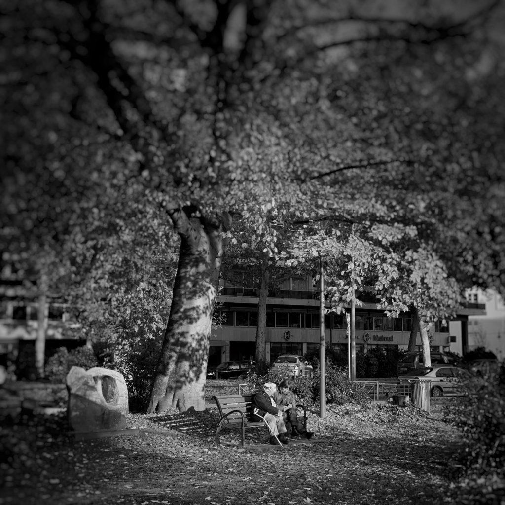 Projet photo 365 - Discussion sous un arbre