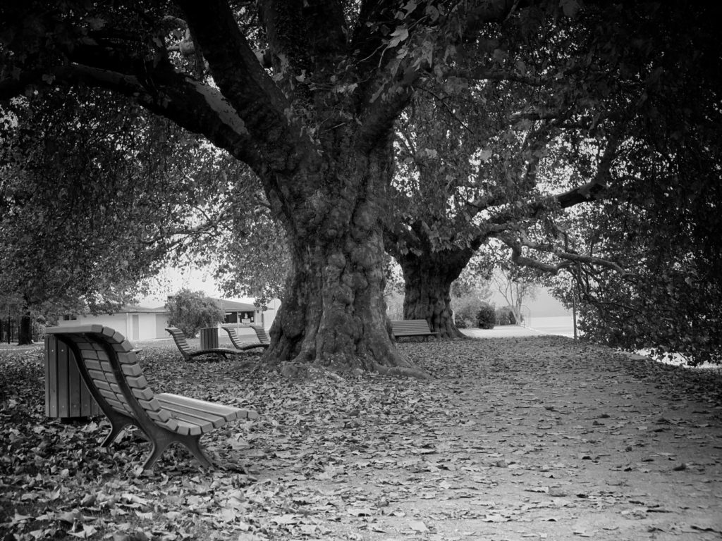 Projet photo 365 - Les platanes de l'Impérial