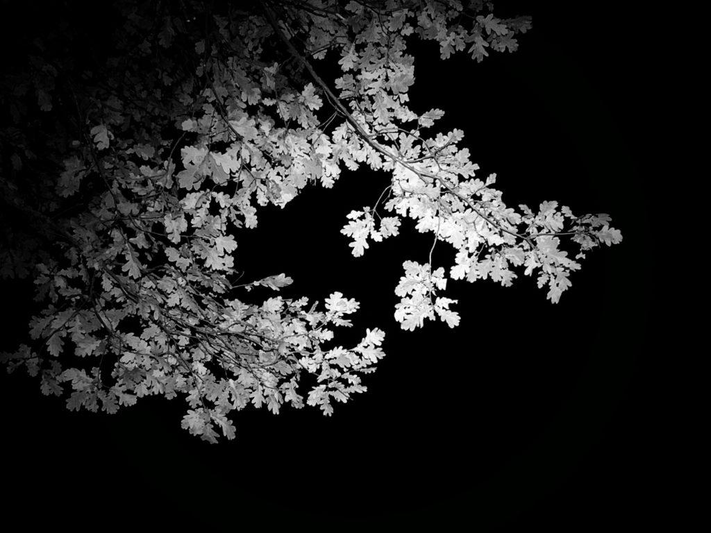 Projet photo 365 - Un chêne dans la nuit