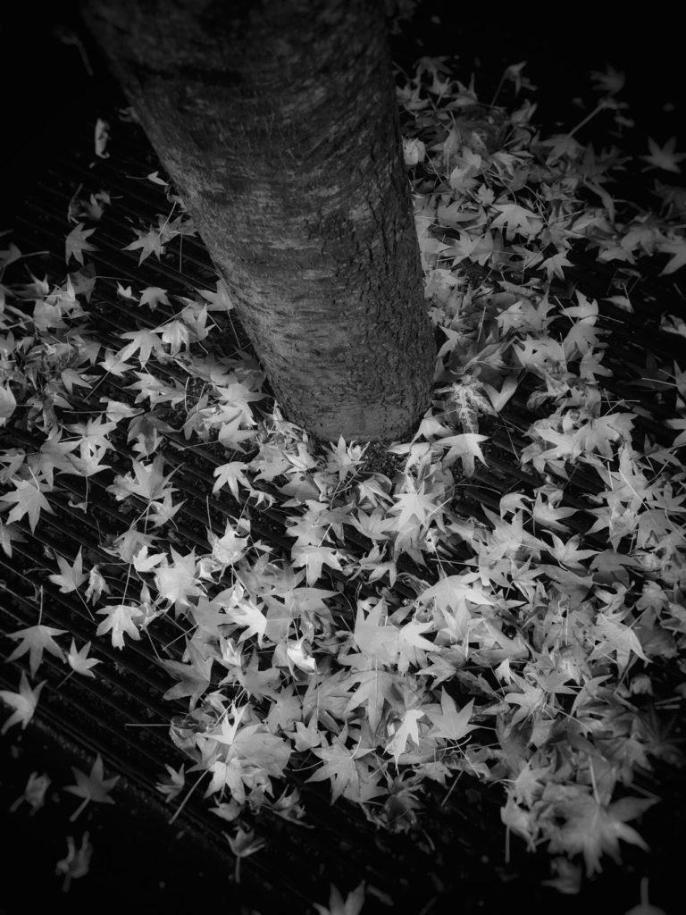 projet 365 - Les feuilles d'automne
