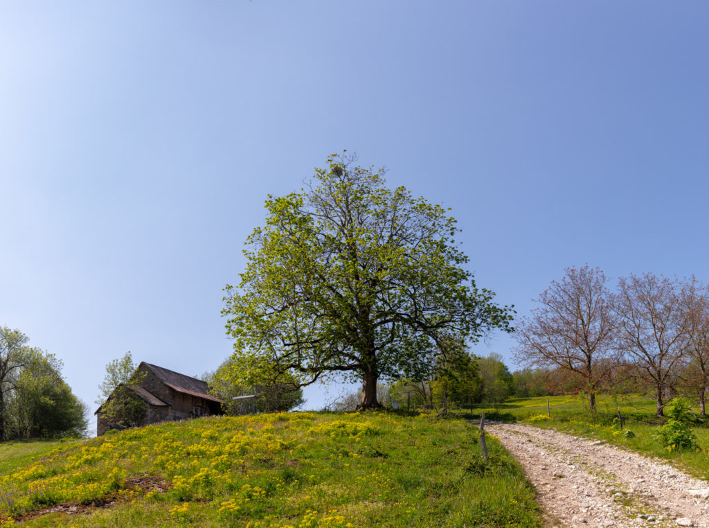 Paysage campagnard en Savoie