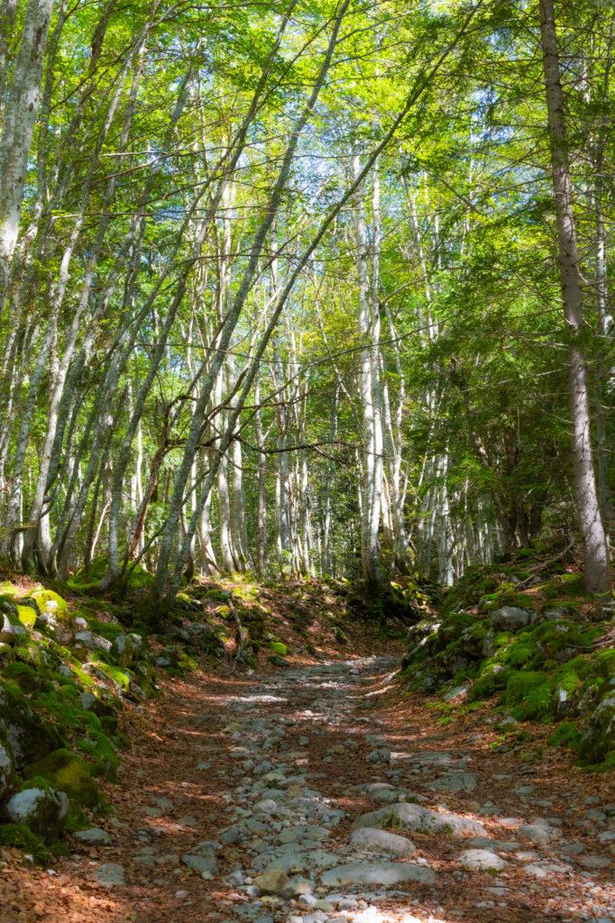 Dans les bois de Forette