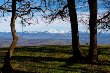 Montagne des princes - Le Mont-Blanc à travers les arbres
