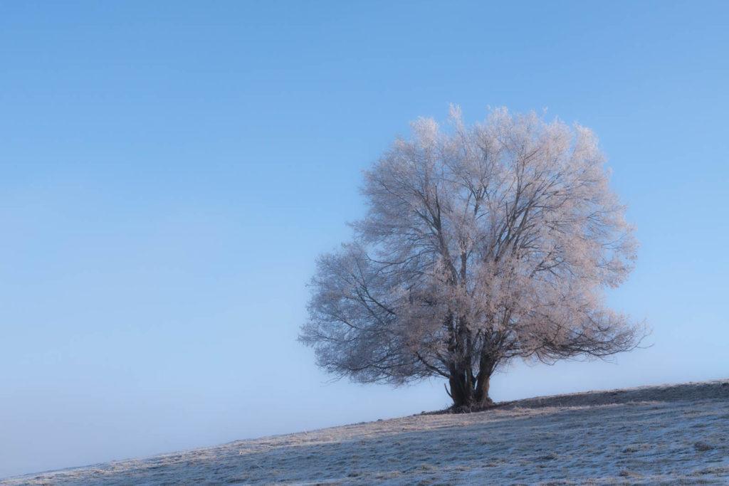 Projet photos 52 - Arbre solitaire complètement gelé
