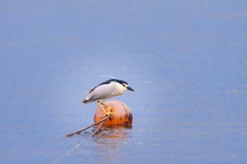 Projet photo 52 - Oiseau sur une bouée