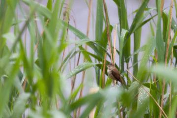 Projet photo 52 - Oiseau sur une branche