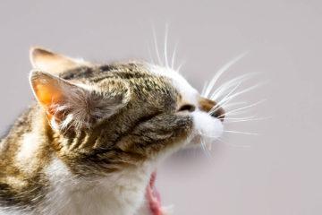 Projet photo 52 - Le chat