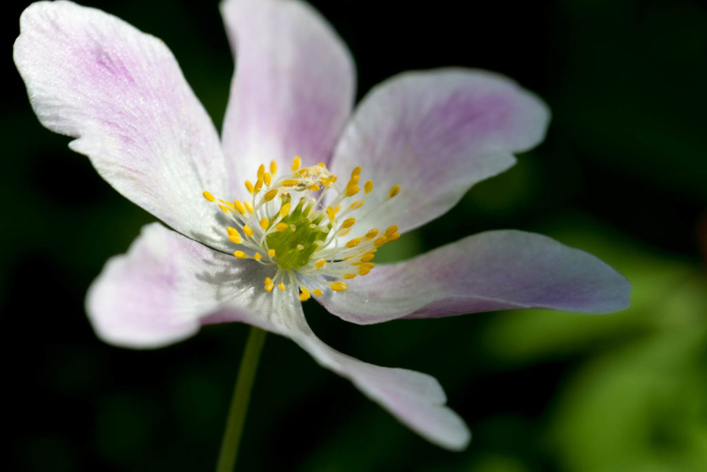 Projet photo 52 - Macro d'une jolie fleur