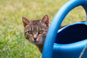 Projet 52 - Le chat et l'arrosoir