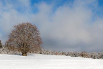 Projet 52 - Panoramique arbre sous la neige