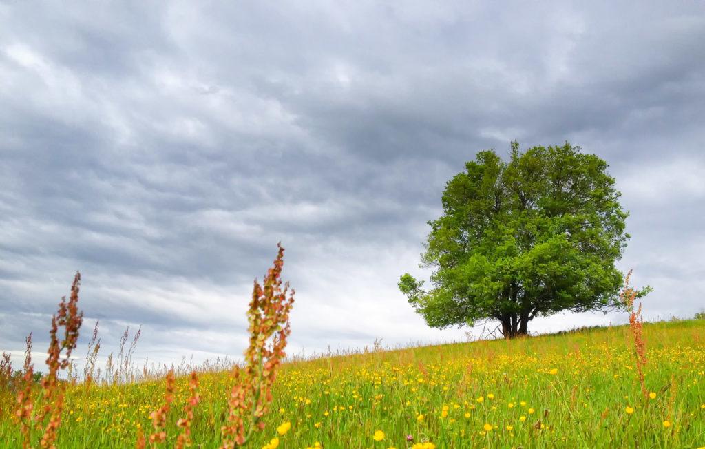Arbre solitaire dans un champs