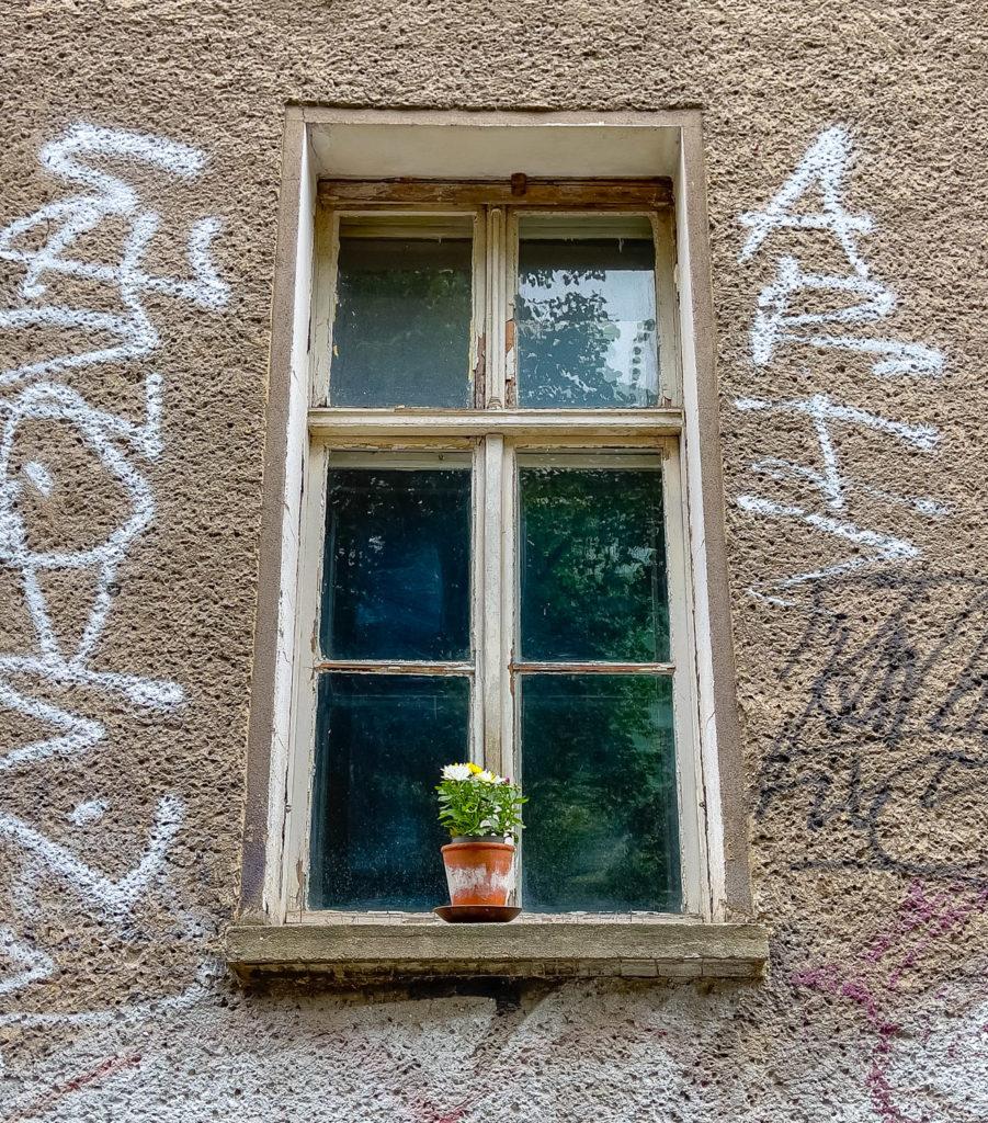 Fleur en pot sur le rebord d'une fenêtre